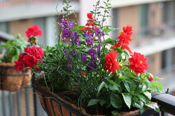 coreyhulse_garden_100523-190526