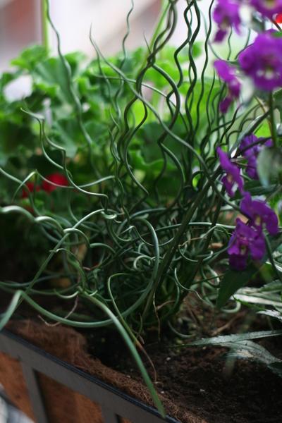 coreyhulse_garden_100523-190550