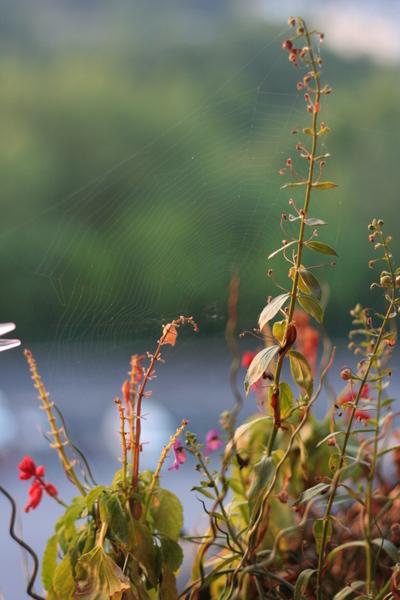 coreyhulse_garden_100715-191448