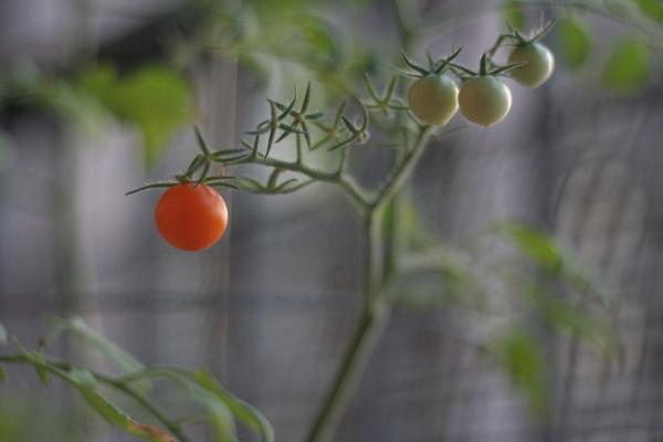 coreyhulse_garden_100722-190718